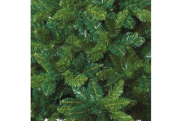 Feeric Lights & Christmas blooming vert test